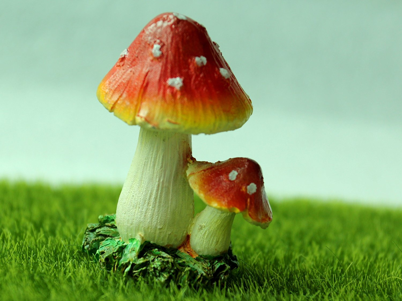 Toadstools Mushroom Miniature Resin Flower Fairy Garden Craft ...