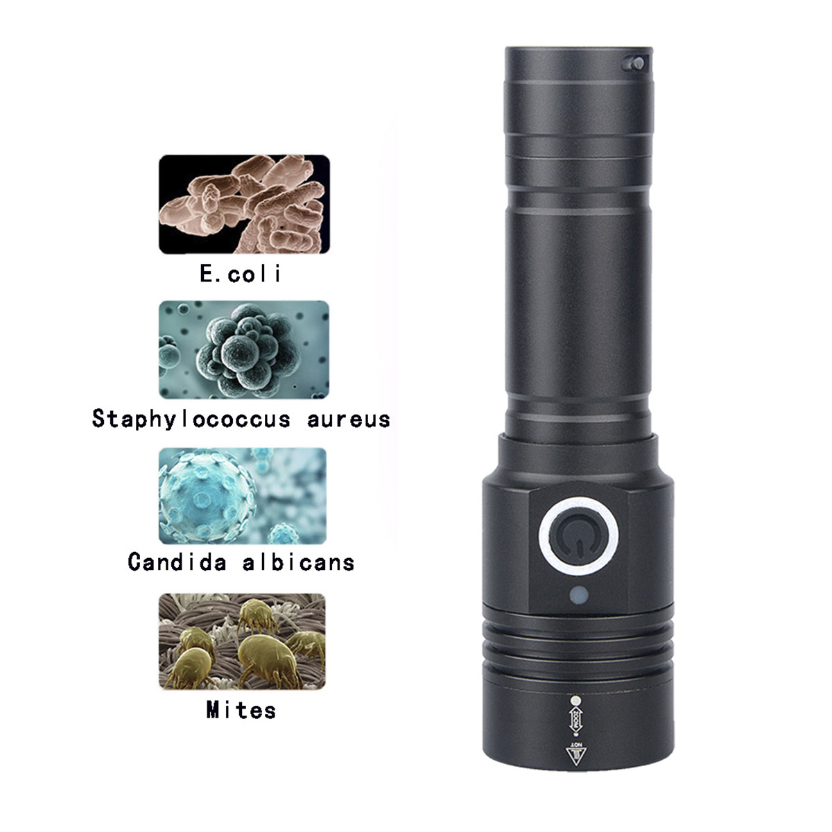 UV 365NM WOODS LAMP Cat Ringworm Detector Flashlight Pet