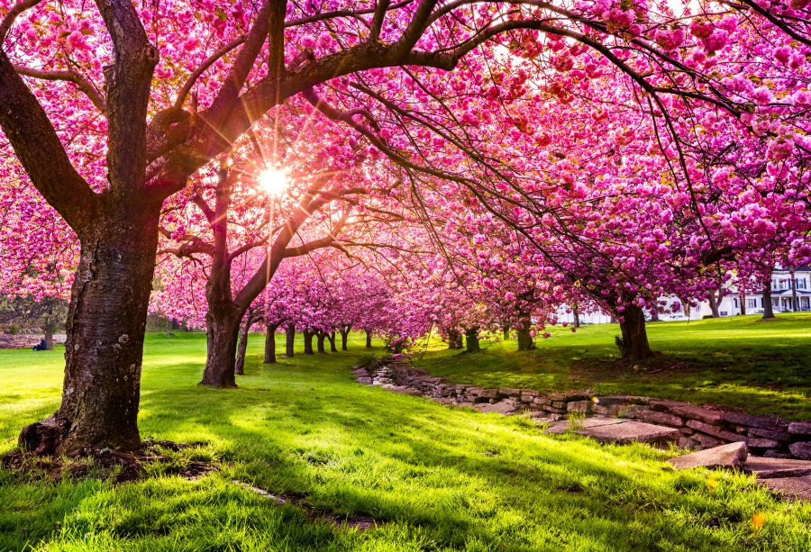 [45+] Spring Nature Scenes Wallpaper on WallpaperSafari |Spring Nature Scenes