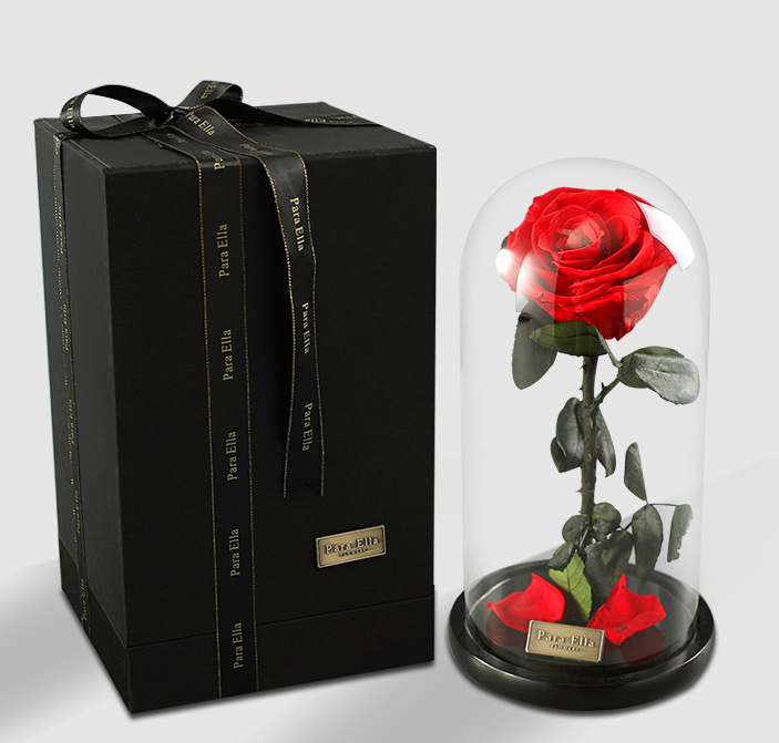 konservierte rose in glasglocke die sch ne und das biest. Black Bedroom Furniture Sets. Home Design Ideas