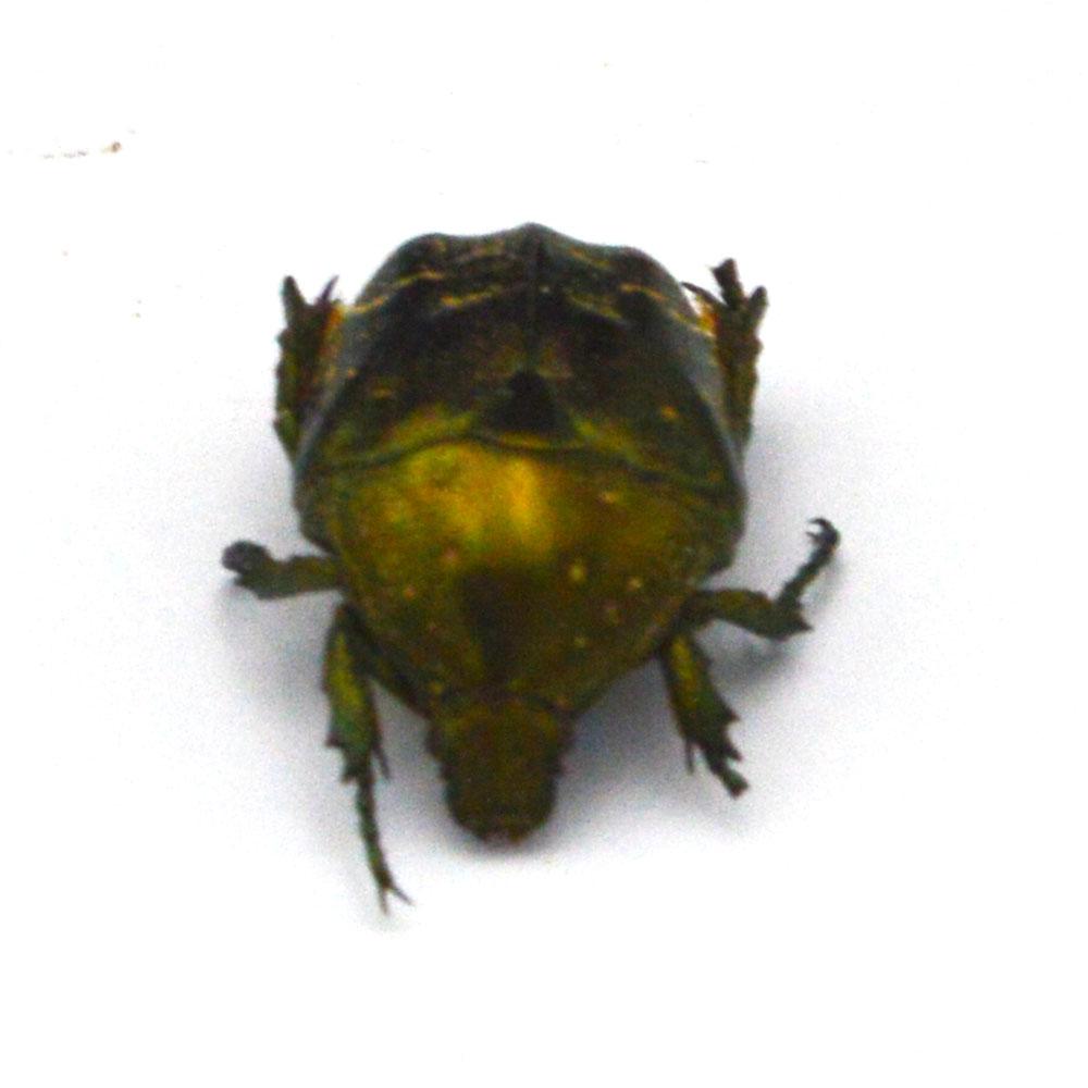 11pcs Beetle specimen Insect Collector Specimen Art