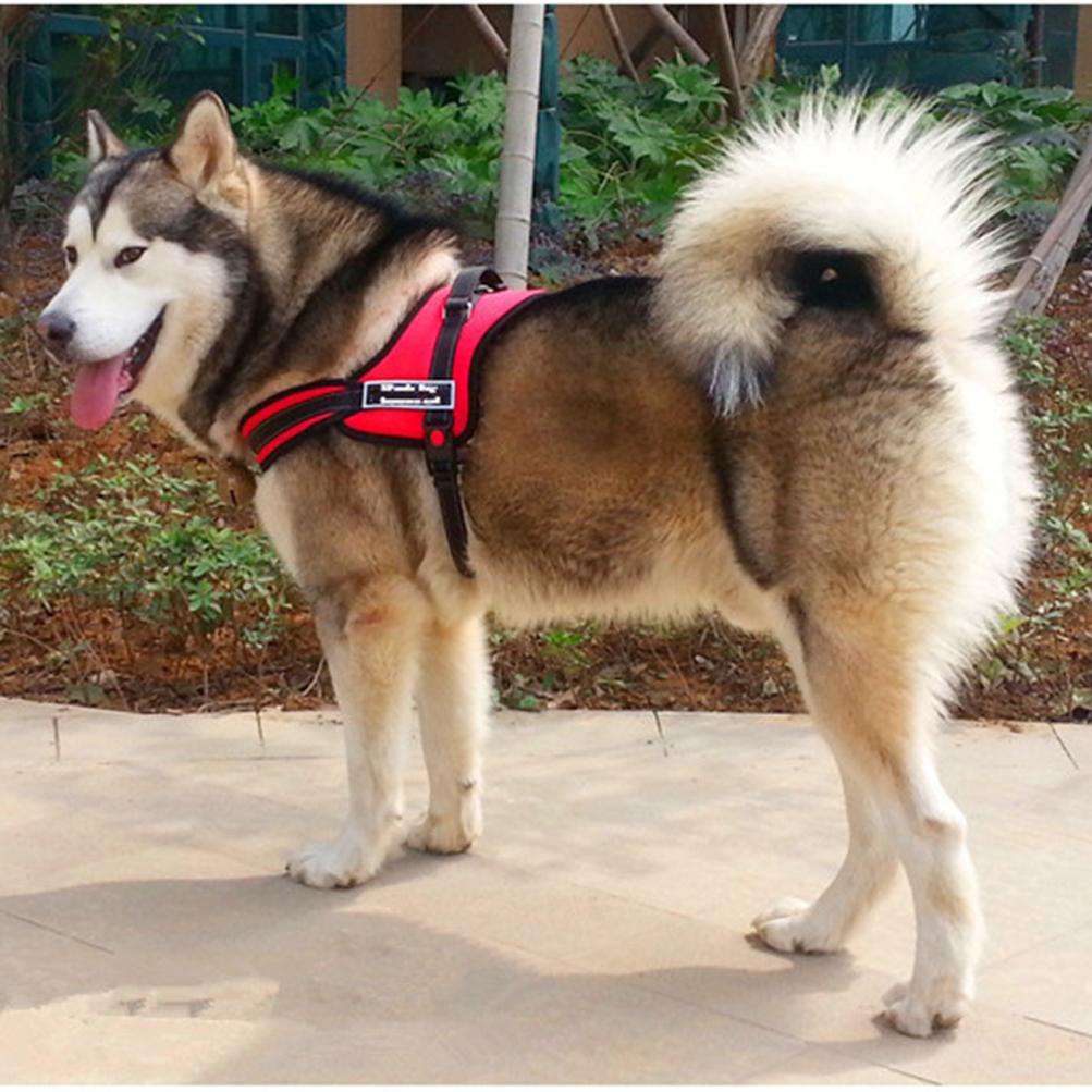 Large Dog Harness Leash Collar Vest For Husky Labrador
