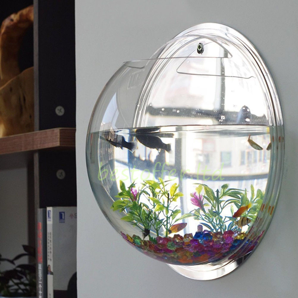 Fish Tank Wall Mounted Large Wall Mount Bubble Bowl Fish Tank Aquarium Beta Goldfish .