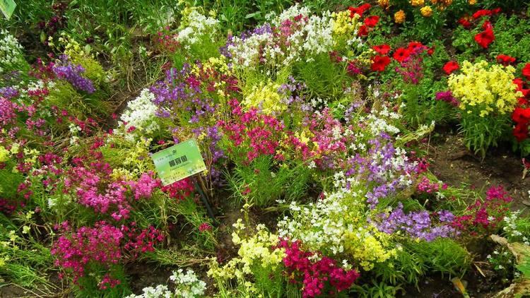 VARIETIES Perennial Annual Flower Seeds Heirloom NON-GMO