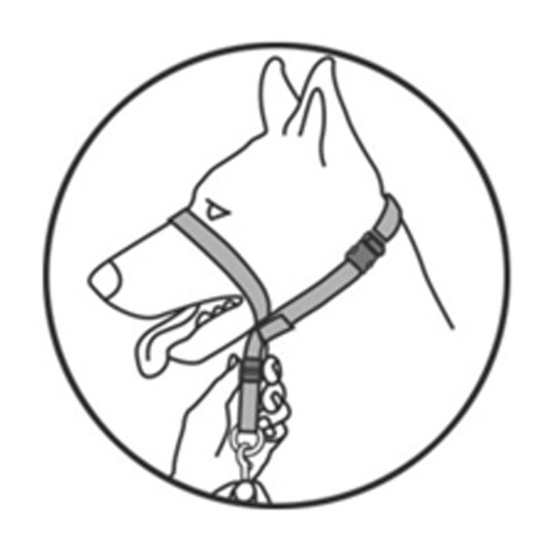 Nylon Rope Slip Dog Training Leash Lead And Collar 47 X 0 59