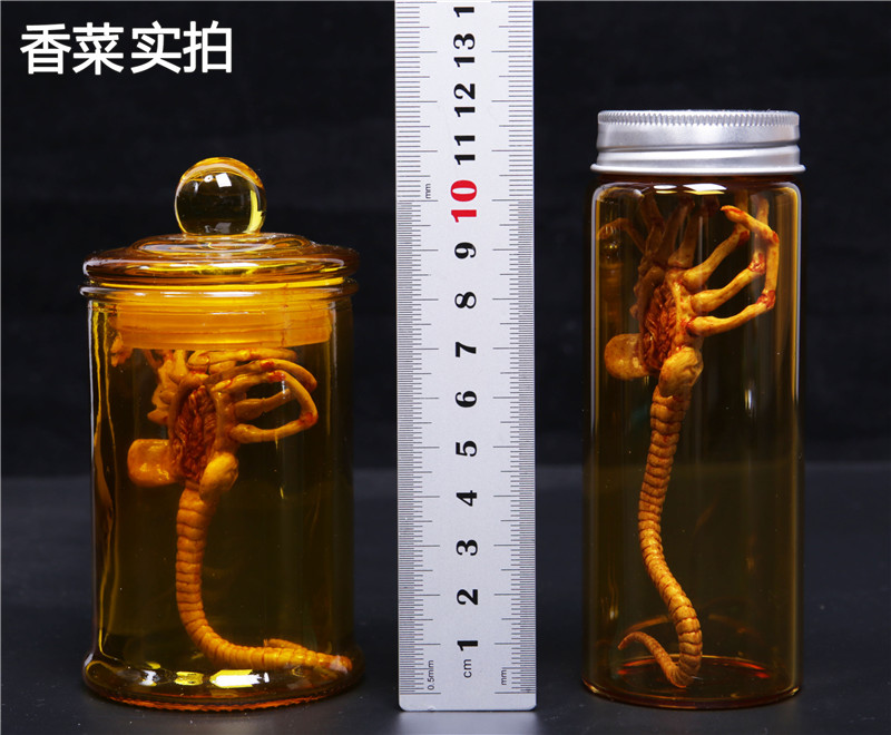 HOT FIGURE TOYS Fire Girl Toys 1//6 alien contract larvae Facehugger 1 PCS