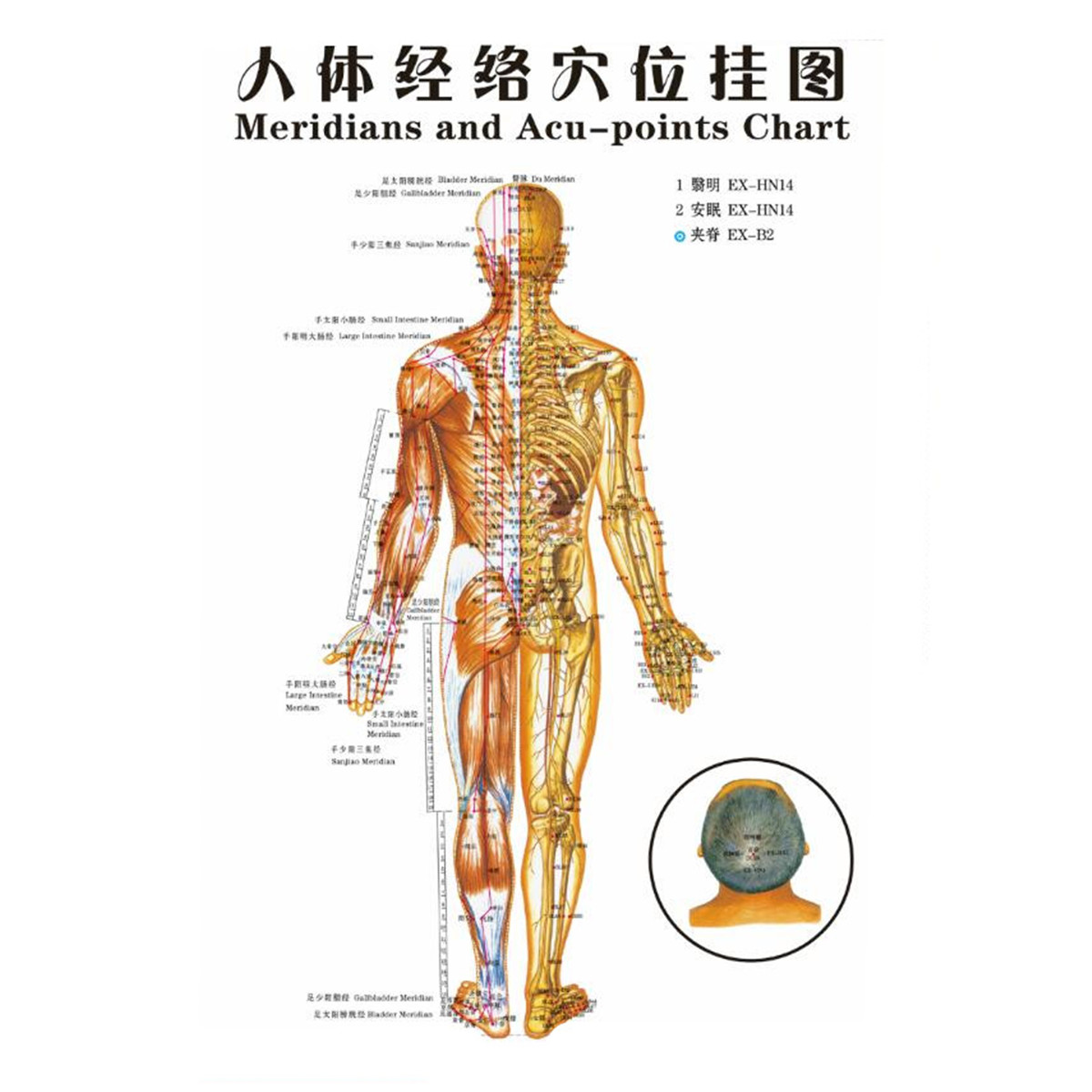 1Pcs Chinese Medicine Body Acupuncture Points Meridians ...